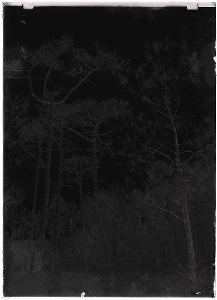 Grands pins - La Vignolle (Lüe) (Titre attribué)