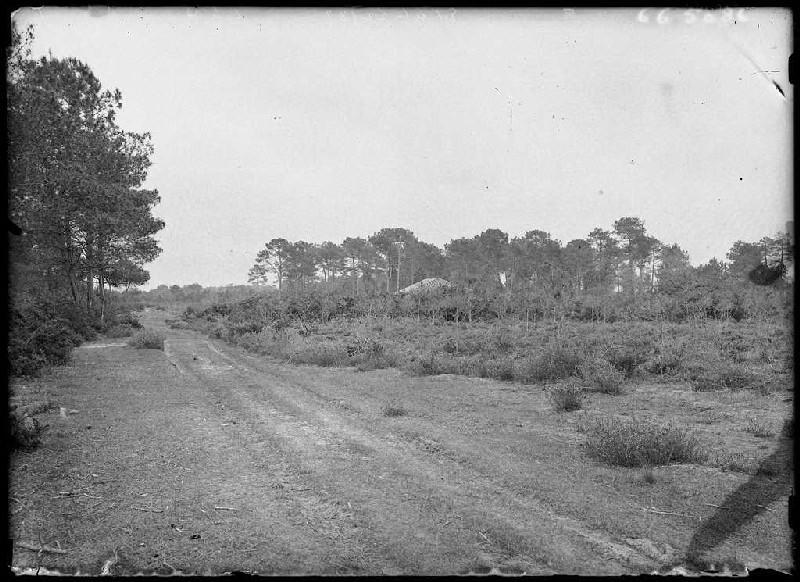 Ancien chemin de Commensacq à Labouheyre - Parc du Salat (Commensacq) (Titre attribué)