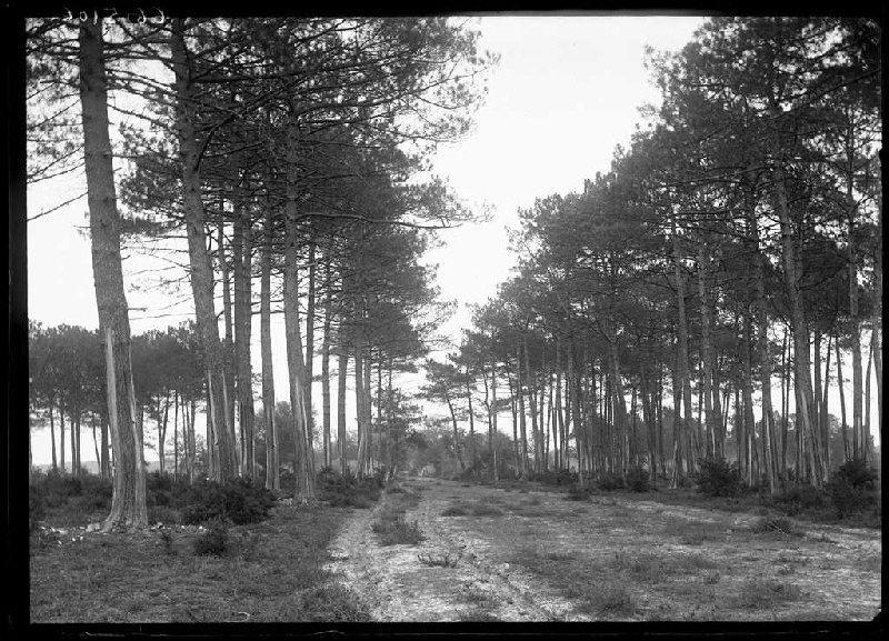 Ancien chemin de Labouheyre à Commensacq - Labouheyre (Landes) (Titre attribué)