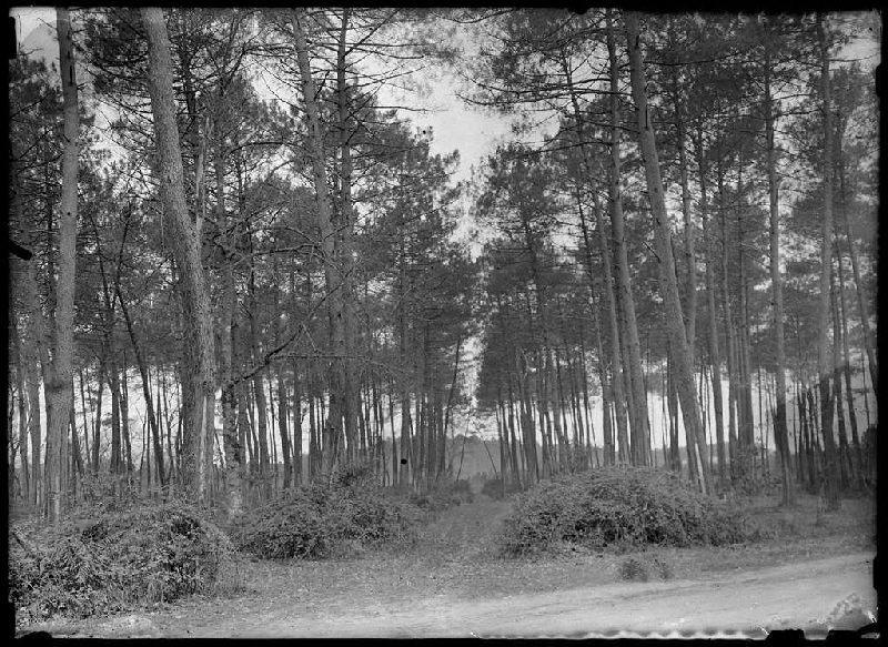 Chemin de la Mouloque - Labouheyre ? (Landes) (Titre attribué)_0