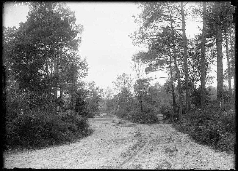 Chemin de la Mouloque - Labouheyre (Landes) (Titre attribué)_0