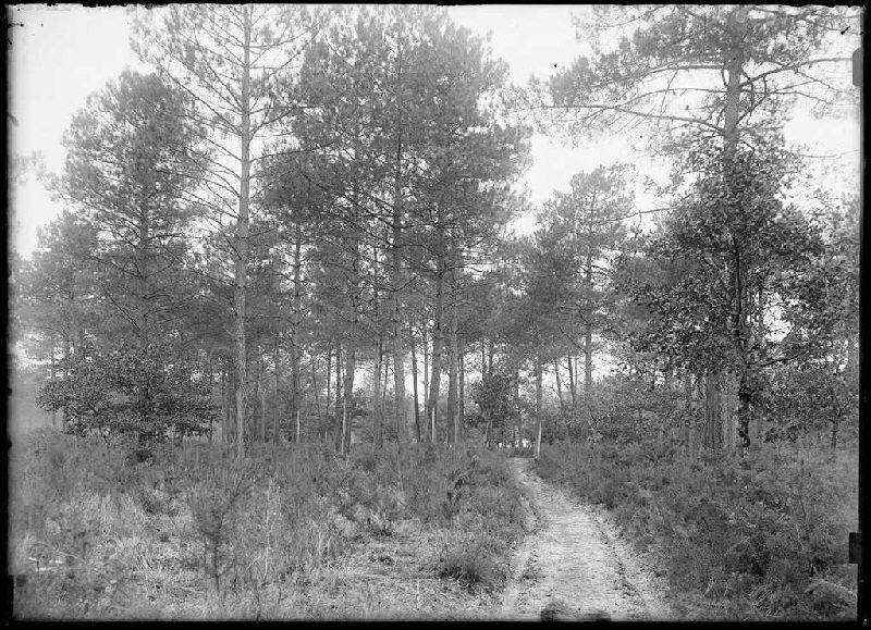 chemin du Bouchon - Le Segot (Labouheyre) (Titre attribué)