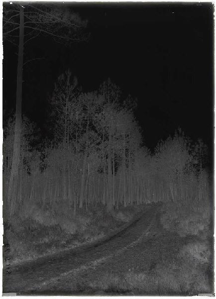 ARNAUDIN Félix : chemin vert du Bouchon - Labouheyre (Landes) (Titre attribué)