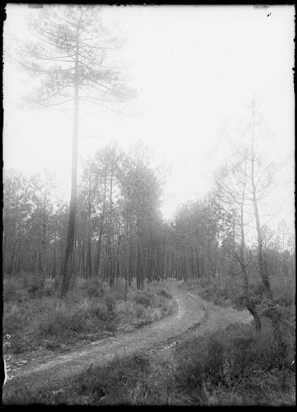 chemin vert du Bouchon - Labouheyre (Landes) (Titre attribué)