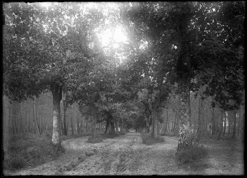 Vue depuis le Moulin de Dupouy - Lüe (Landes) (Titre attribué)_0