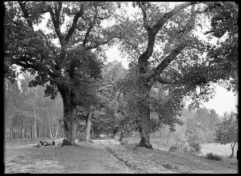 ARNAUDIN Félix : Vue depuis le Moulin de Dupouy - Lüe (Landes) (Titre attribué)