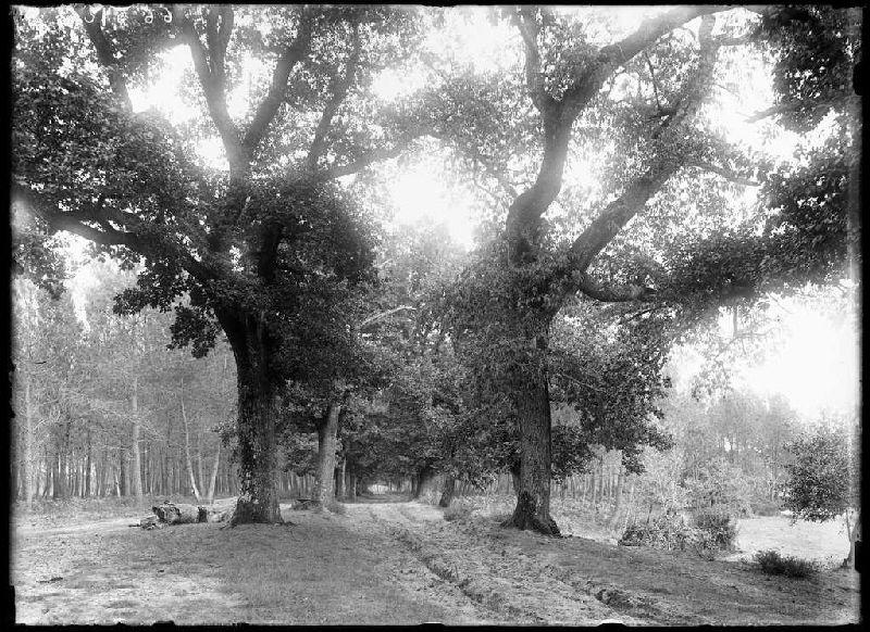 Vue depuis le Moulin de Dupouy - Lüe (Landes) (Titre attribué)