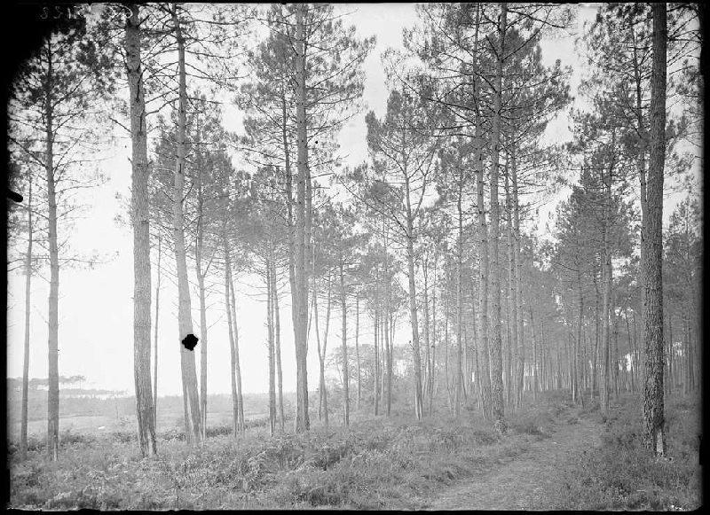 ARNAUDIN Félix : Ancien chemin du parc Naou - Lüe (Landes) (Titre attribué)