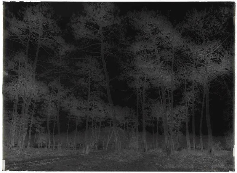 maison Maubourguet et grands pins - Grué (Lüe) (Titre attribué)