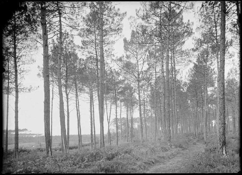 Ancien chemin du parc Naou - Lüe (Landes) (Titre attribué)