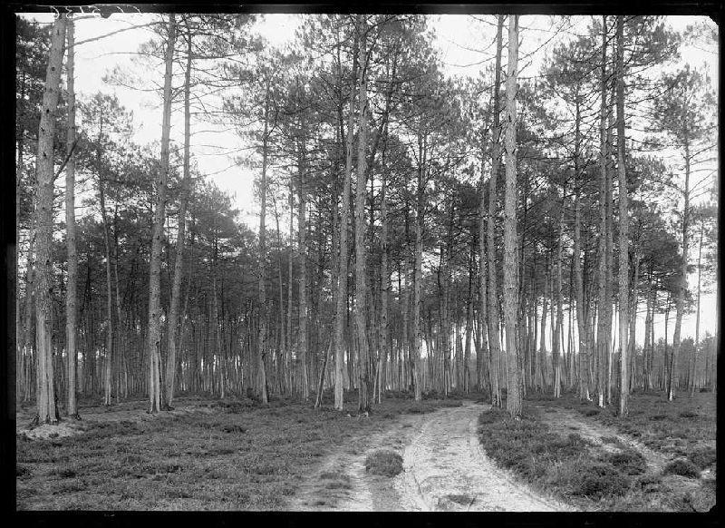 ARNAUDIN Félix : chemin: Le Bouchon ou Cantore ? - Lüe (Landes) (Titre attribué)