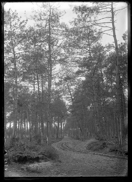 Grands pins - Le Mariné (Lüe) (Titre attribué)