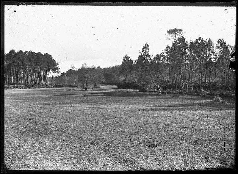 Prairie du Moulin - La Boyre (Labouheyre) (Titre attribué)
