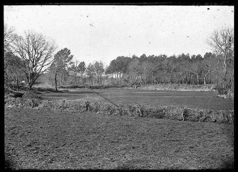 Prairie de la Mouleyre - Labouheyre (Landes) (Titre attribué)_0