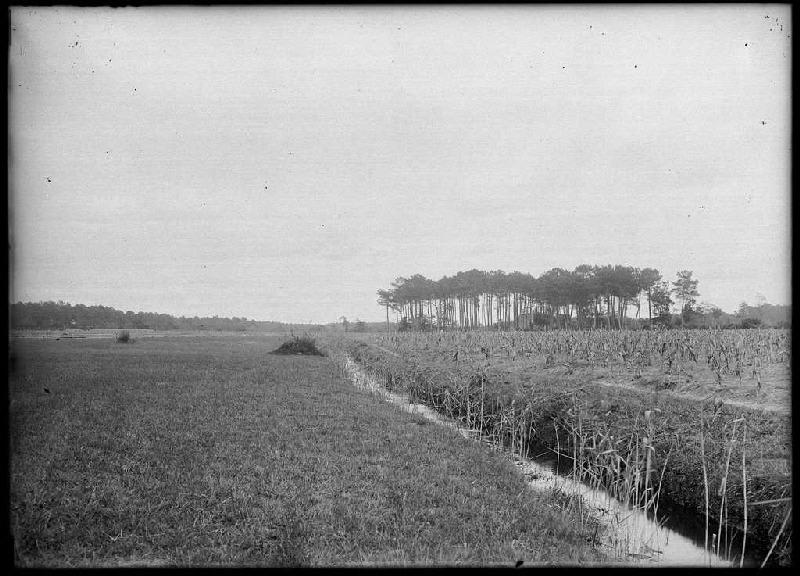 Pins Saint-Esprit - Labouheyre (Landes) (Titre attribué)_0