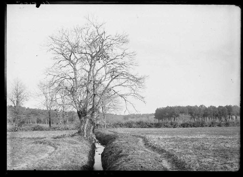 ARNAUDIN Félix : Prairie - La Boyre ? (Labouheyre) (Titre attribué)