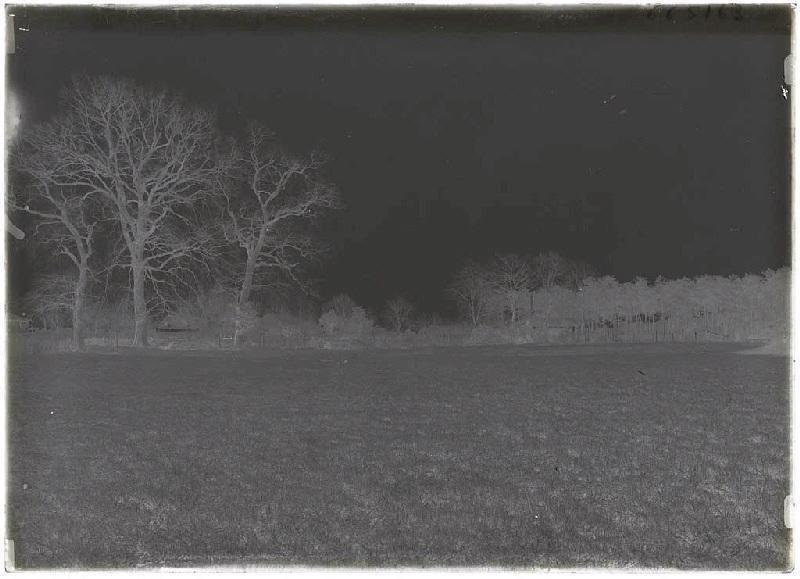 Prairie du Grillat - Labouheyre (Landes) (Titre attribué)