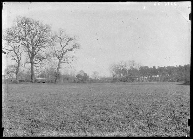 ARNAUDIN Félix : Prairie du Grillat - Labouheyre (Landes) (Titre attribué)