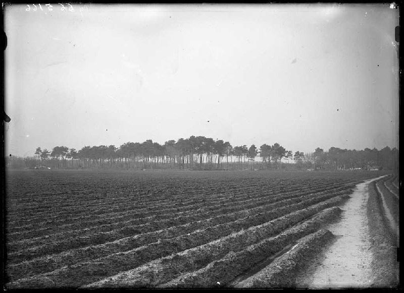 ARNAUDIN Félix : Champ près du jardin de Barbé - Grué (Lüe) (Titre attribué)