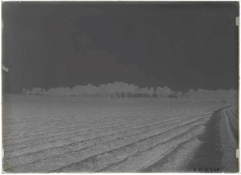 ARNAUDIN Félix : Grands pins bordant le champ - Grué (Lüe) (Titre attribué)