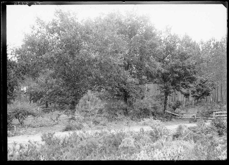 Prairie du Harioou - Harioou (Lüe) (Titre attribué)