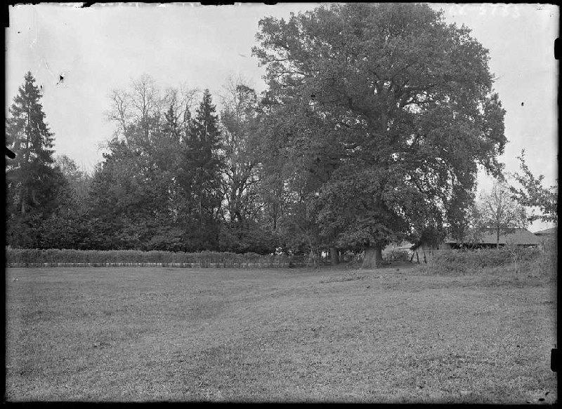 ARNAUDIN Félix : arbres - Belin-Beliet (Gironde) (Titre attribué)
