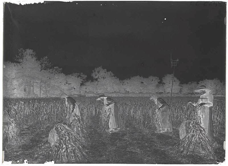 Récolte du panis - Grué (Lüe) (Titre attribué)_0