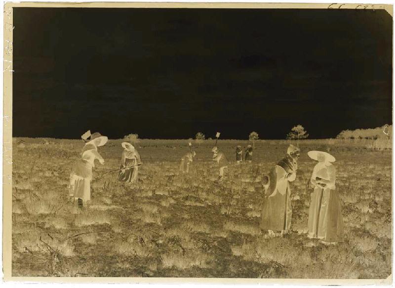 ARNAUDIN Félix (photographe) : 'Taillayres', coupeuses de bruyère - Pradéou (Commensacq) (Titre attribué)