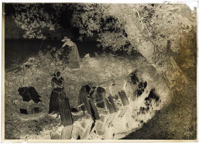 ARNAUDIN Félix (photographe) : Lavandières - Pemothe (Labouheyre) (Titre attribué)