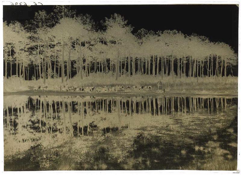 ARNAUDIN Félix (photographe) : Chevrier et son troupeau devant une lagune