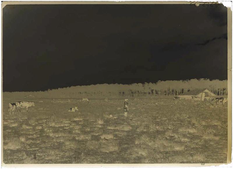 Vacher et son troupeau_0