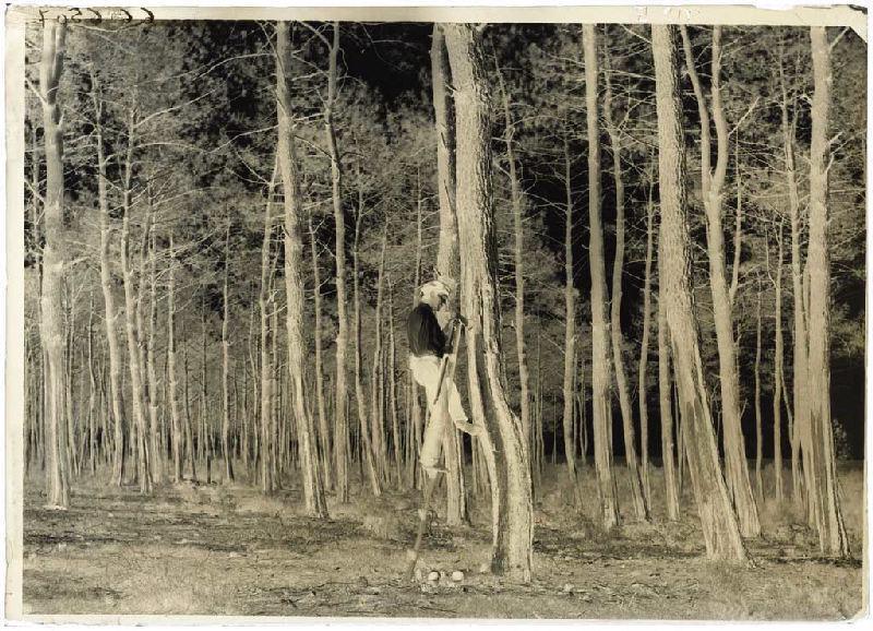 ARNAUDIN Félix (photographe) : Résinier