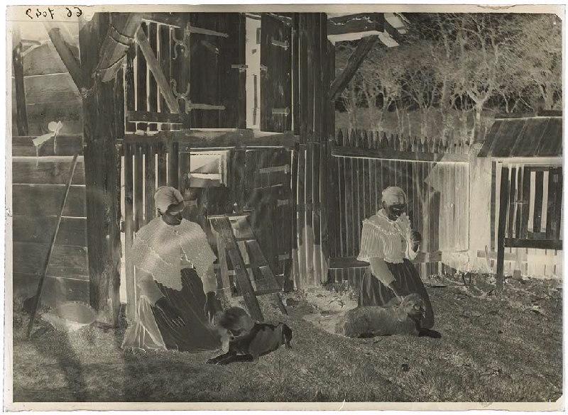 Marie Darlanne, une femme et deux chiens_0