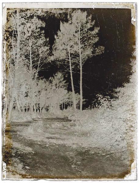 ARNAUDIN Félix (photographe) : Sentier