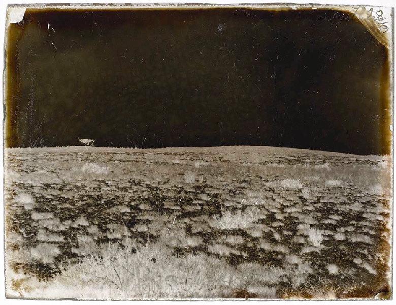 La lande de Ligotenx, butte de sable et d'herbe du Pin-du-Faucon, Pin-du-Faucon, de 250 pas du Pin, de l'E. à l'O. ; Butte du Pin du Faucon (titre attribué)_0