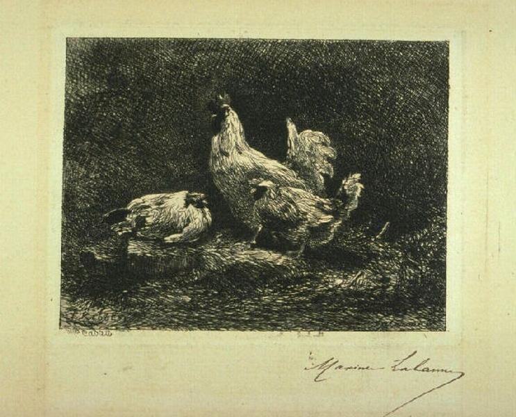 Les poules_0
