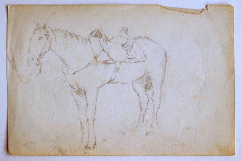 Etude de cheval_0