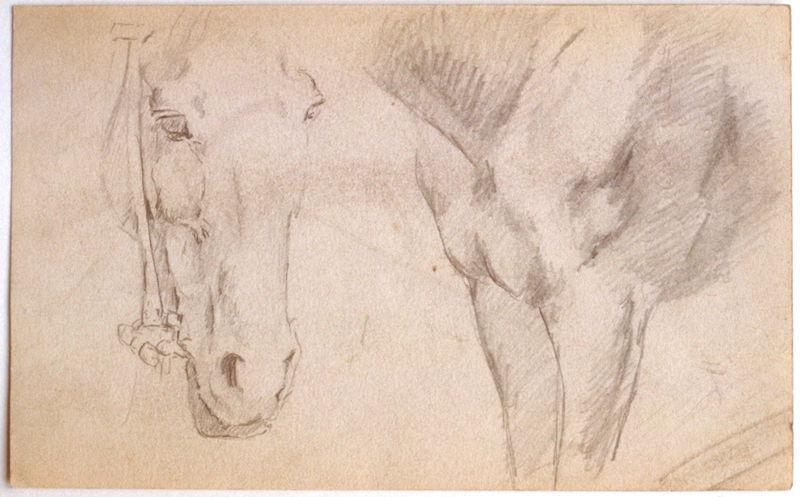 Etude : tête et poitrail de cheval_0