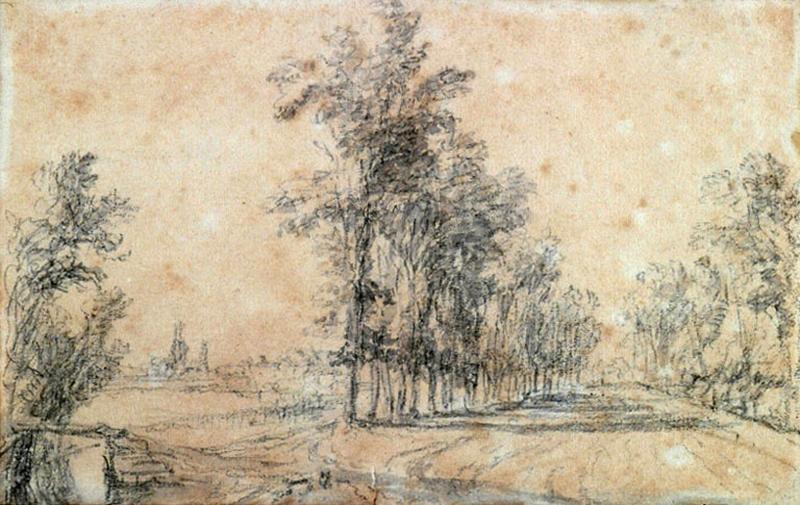 Route bordée d'arbres_0