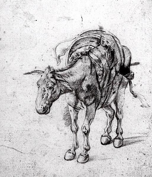 Un âne_0