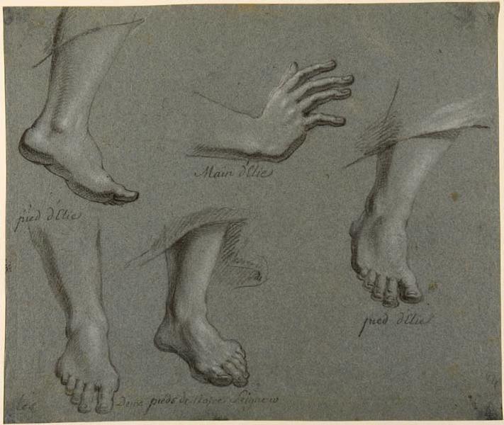 Feuille d'études de pied et de mains_0