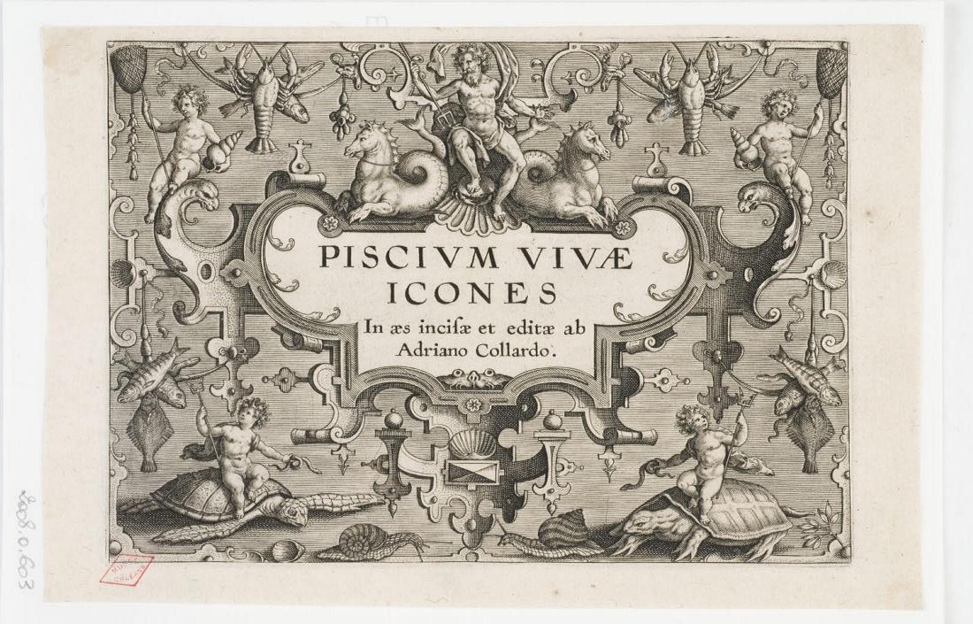 COLLAERT Adriaen (inventeur, graveur, éditeur) : Frontispice de Piscium vivae icones