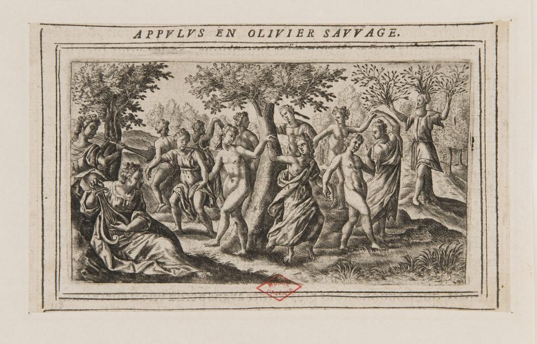 Métamorphose d'Appulus en olivier sauvage_0