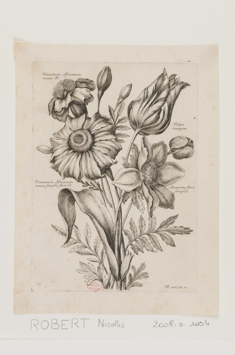 Tanaisies, tulipe et anémone_0