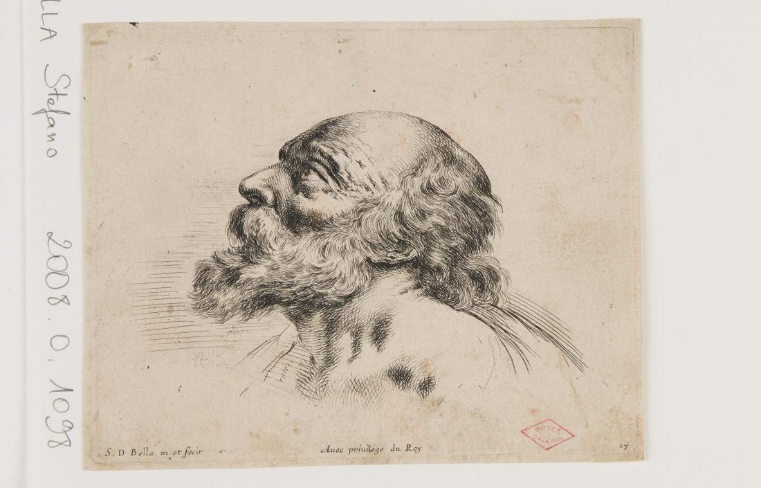 Tête d'homme barbu de profil_0