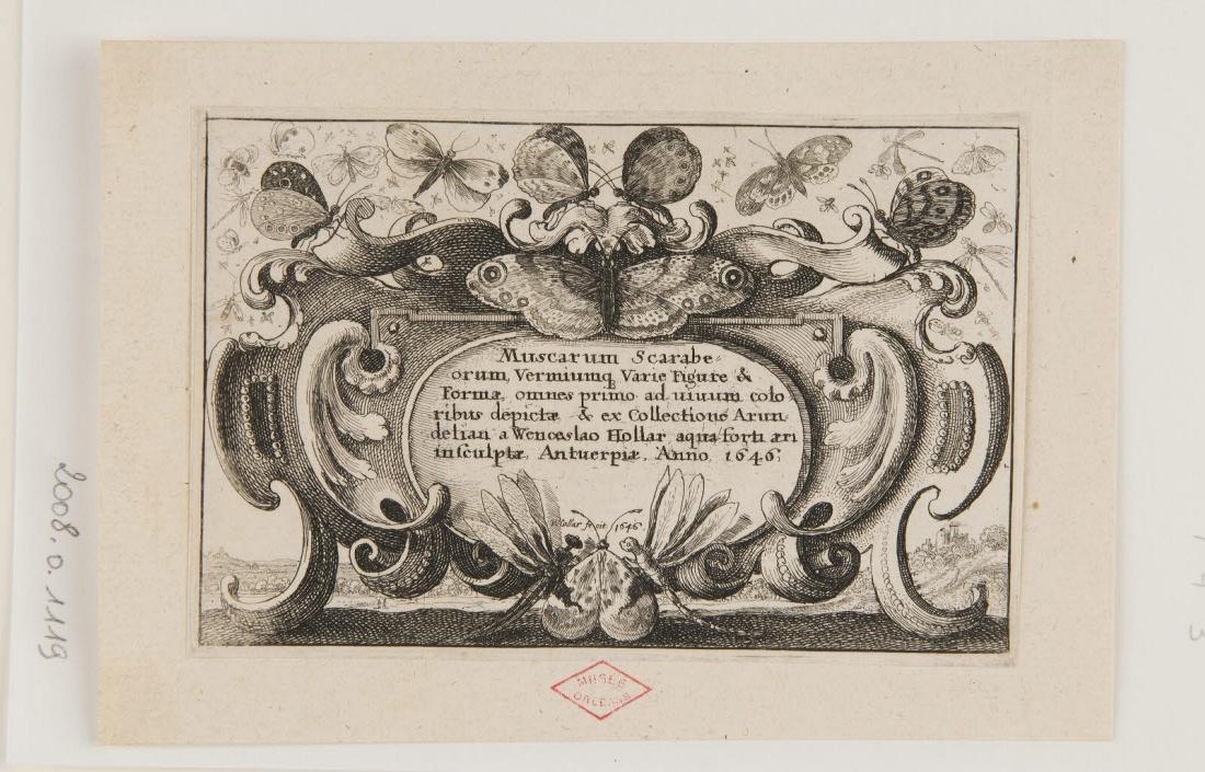 Frontisipice de Muscarum Scarabeorum, Verminumque Varie Figure & Formae..._0