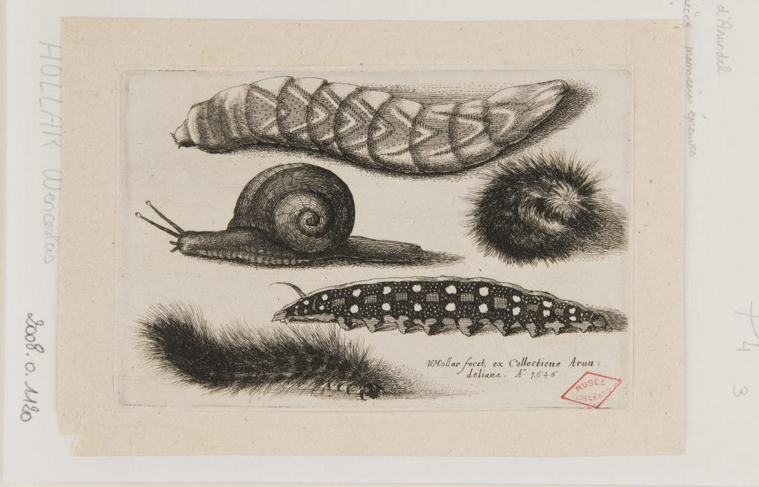 Chenilles et escargots_0