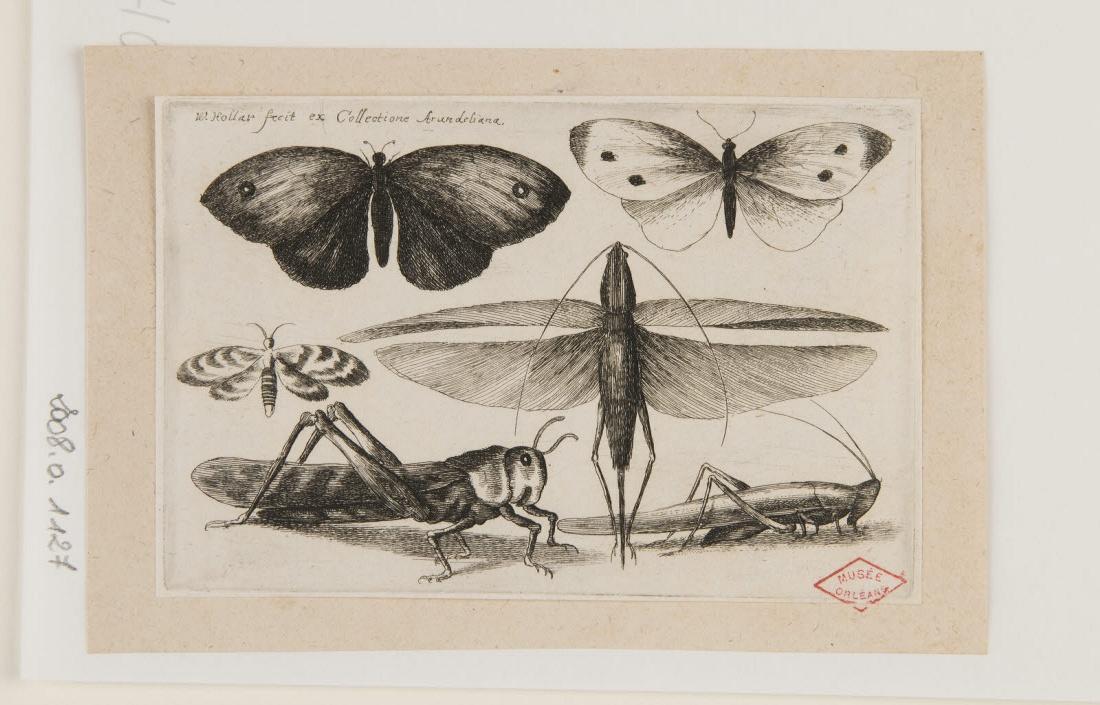 Papillons et sauterelles_0