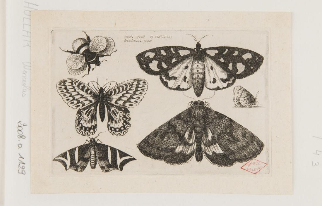 Papillons et bourdon_0