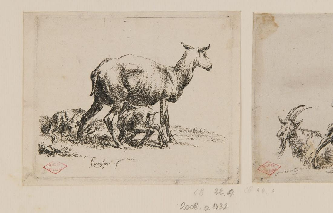 Une brebis et deux agneaux_0